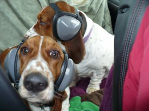 Noise Canceling Headphones for Dogs